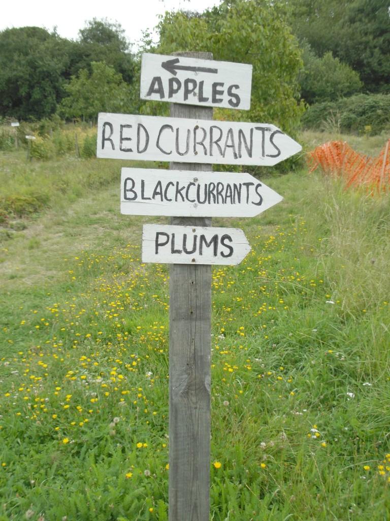 fruit picking benfleet
