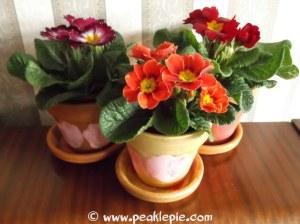 how to paint pot plants