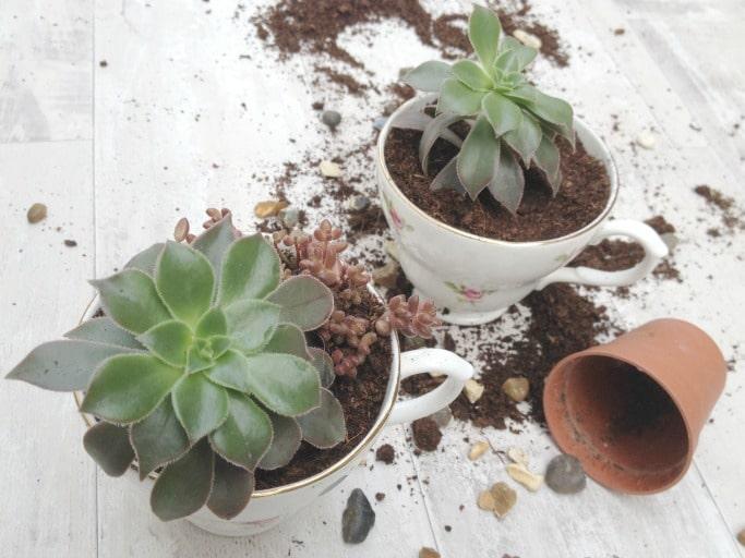 DIY teacup planter full tutorial