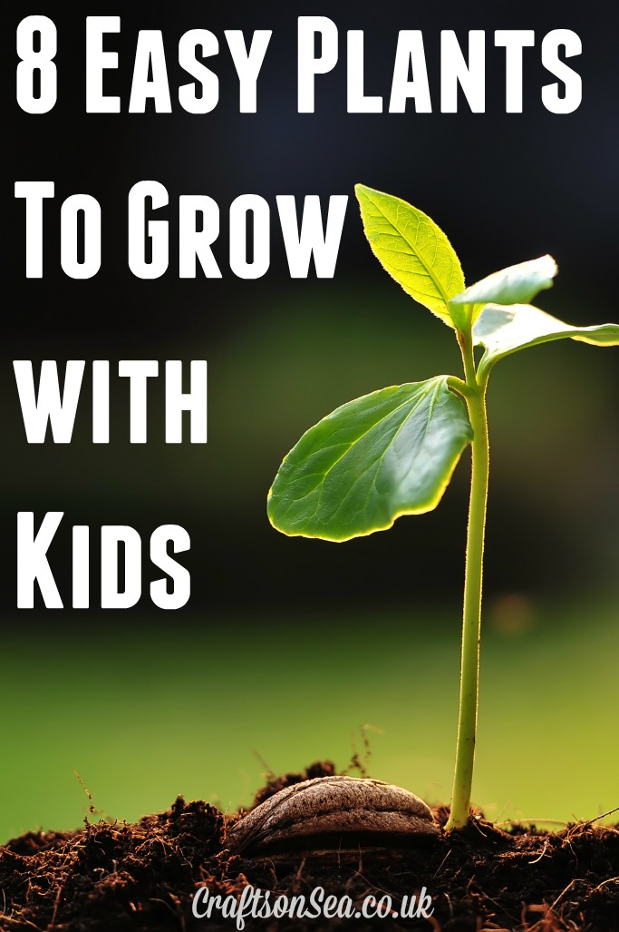 Easy Plants To Grow With Kids